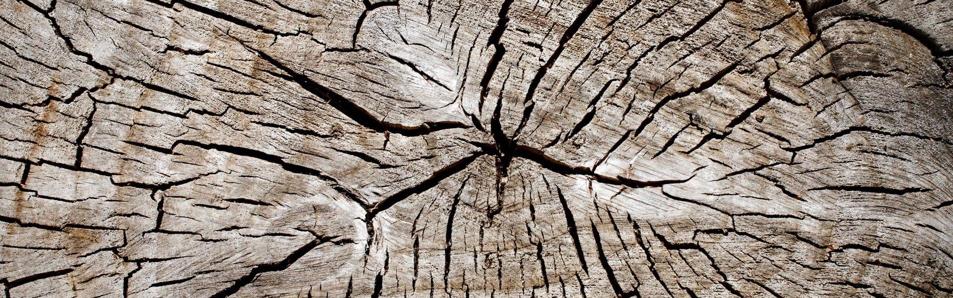 תקריב על גזע עץ. תמונה ראשית: Bigstock