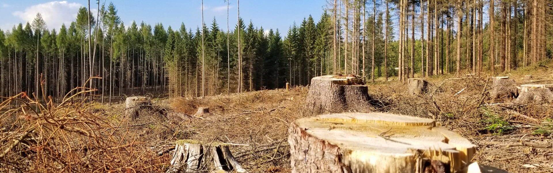 https://www.publicdomainpictures.net/en/view-image.php?image=296125&picture=deforestation