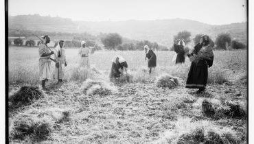 """מלאכה של עניים. לקט בשדות בית-לחם, """"שחזור"""" של מגילת רות על ידי צלמי אמריקן קולוני, סוף המאה ה-19. מאוסף ספריית הקונגרס האמריקני."""